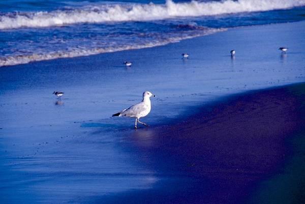 Ocean Art Print featuring the photograph Birds On Beach by George Ferrell
