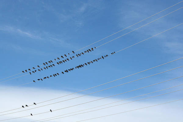Birds Art Print featuring the photograph Birds On Wires by Ric Bascobert