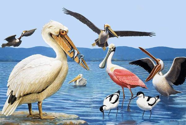 Birds; Beaks; White Pelican; Brown Pelican; Roseate Spoonbill; Avocet; Fish; Water; Lake; America Art Print featuring the painting Birds With Strange Beaks by R B Davis