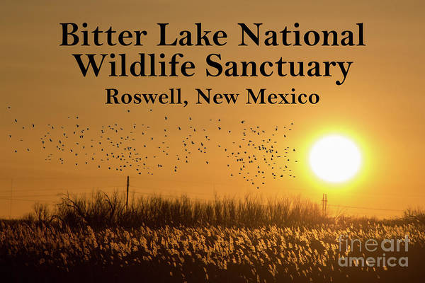 Nature Art Print featuring the photograph Bitter Lake National Wildlife Refuge Birds, Roswell, New Mexico by Glen Matthew Laughton