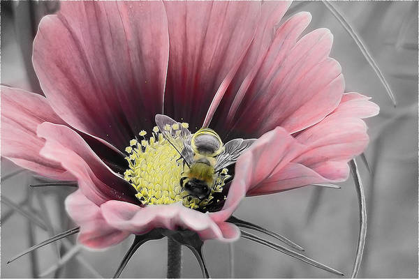 Nature Art Print featuring the photograph Bizzybee by Janice Bajek