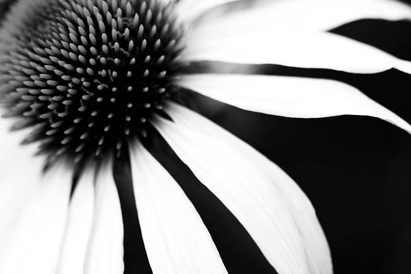 Horizontal Art Print featuring the photograph Black And White Flower Maco by Copyright Johan Klovsjö