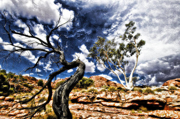 Tree Art Print featuring the photograph Black And White by Marco Moscadelli