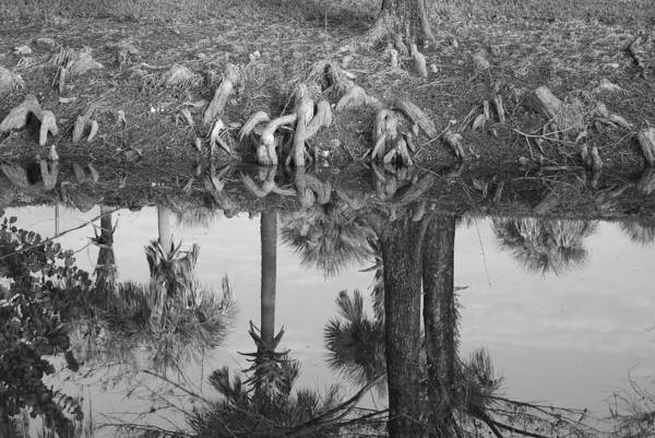 Roots Art Print featuring the photograph Black And White Water Reflections by Rob Hans