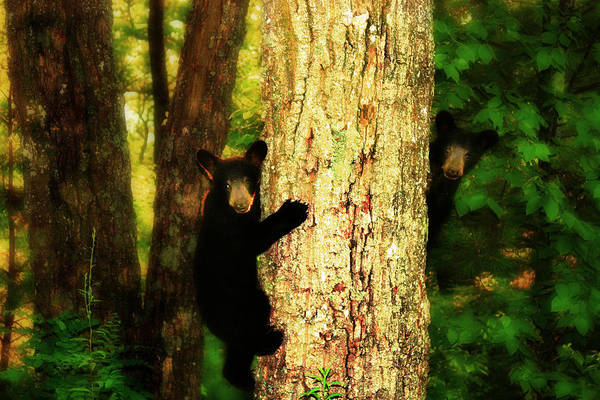 Black Bear Cubs Art Print featuring the photograph Black Bear Cubs by Gray Artus