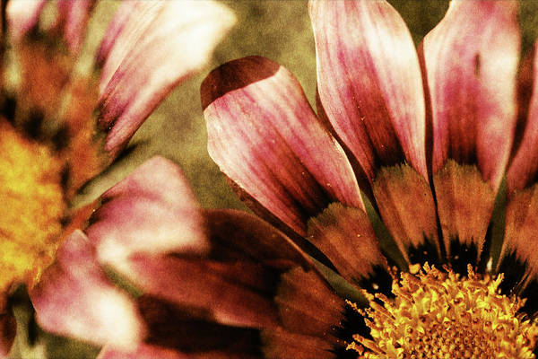 Blanket Flowers Art Print featuring the photograph Blanket Flowers by Bonnie Bruno