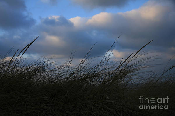 Dunes Art Print featuring the photograph Blowing In The Wind by Timothy Johnson