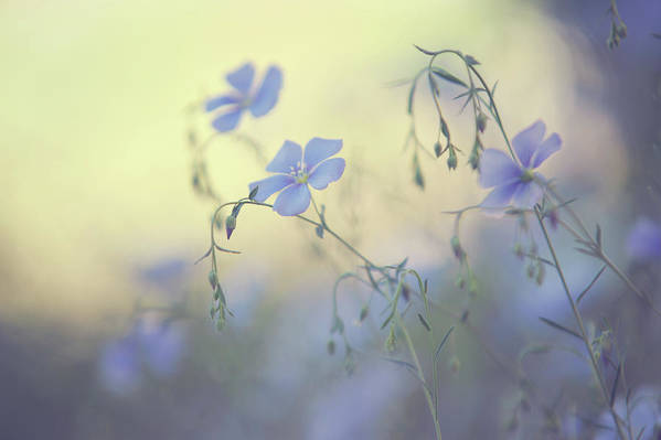 Jenny Rainbow Fine Art Photography Art Print featuring the photograph Blue Flex Flower. Nostalgic by Jenny Rainbow