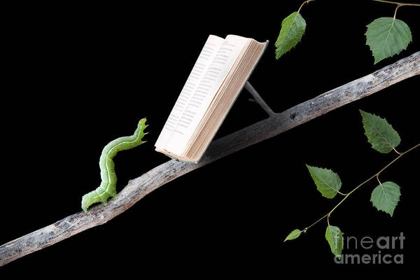 Worm Art Print featuring the photograph Book Worm by Cindy Singleton