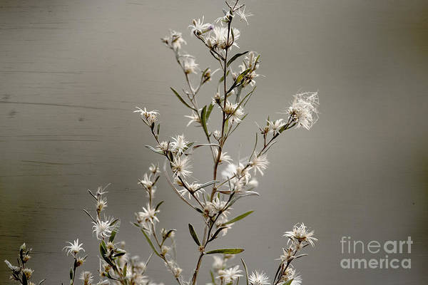 Flower Art Print featuring the photograph Botswana Wildflower by Kay Brewer