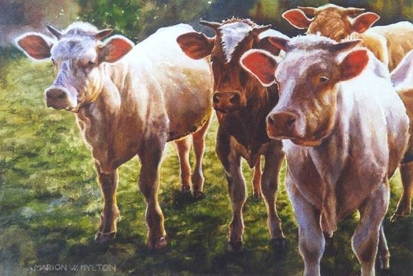Animals Art Print featuring the painting Bovine Curiosity by Marion Hylton