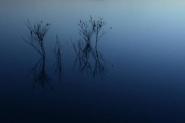 Water Art Print featuring the photograph Branches In The Lake by Thomas Morris
