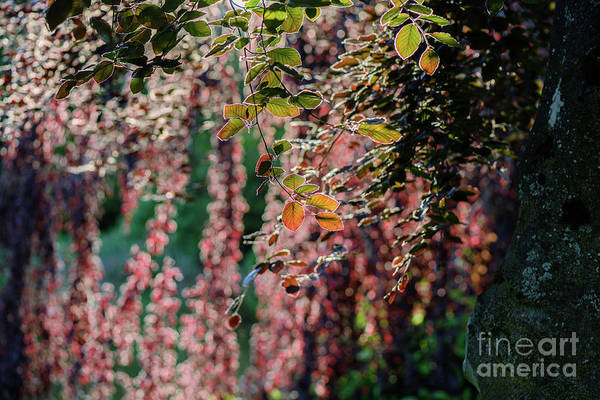 Spring Art Print featuring the photograph Branches Of A Tree With Colorful Leaves Shining In The Sunlight by Viktor Birkus