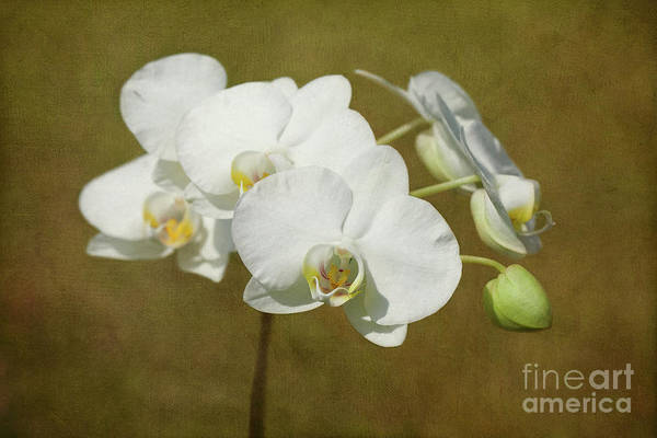 Orchid Art Print featuring the photograph Brazen Beauty by Beve Brown-Clark Photography