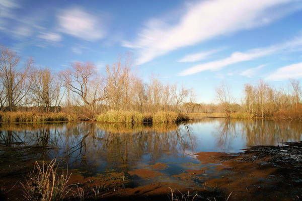 Texas Wetland Art Print featuring the photograph Brazos Bend Winter Bliss by Katrina Lau
