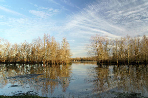 Texas Art Print featuring the photograph Brazos Bend Winter Reflections by Katrina Lau