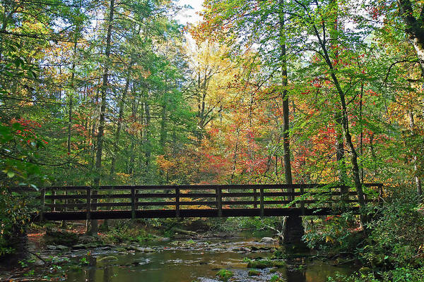 Fall Art Print featuring the photograph Bridge In The Forest by James Jones