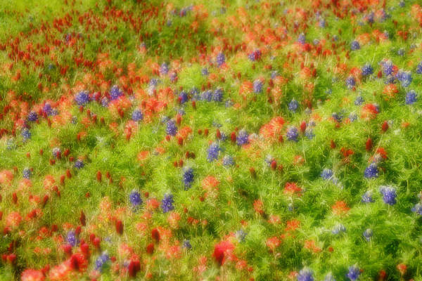 Spring Art Print featuring the photograph Brilliant 2 by Carolyn Fletcher