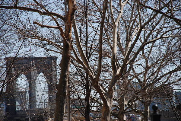 Architecture Art Print featuring the photograph Brooklyn Bridge Thru The Trees by Rob Hans