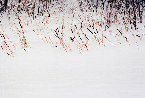 Winter Art Print featuring the photograph Bull Rushes In The Snow Db by Lyle Crump