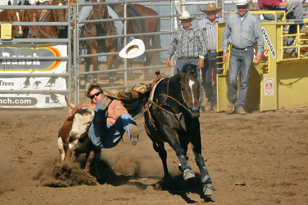 Cowboy Art Print featuring the photograph Bulldogging At The Rodeo by Christine Till