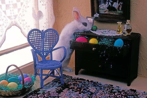 Bunny Art Print featuring the photograph Bunny In Small Room by Garry Gay
