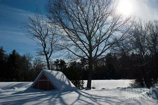 Sunshine Art Print featuring the photograph Buried In Snow by Frank Garciarubio