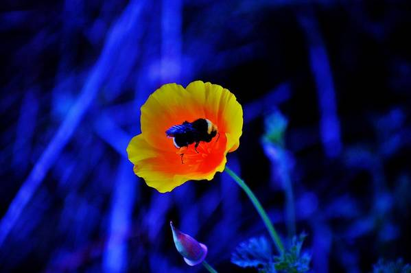 Flower Art Print featuring the photograph Busy Bee by Helen Carson