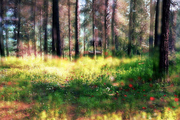 Impressionistic Art Print featuring the photograph Cabin In The Woods In Menashe Forest by Dubi Roman