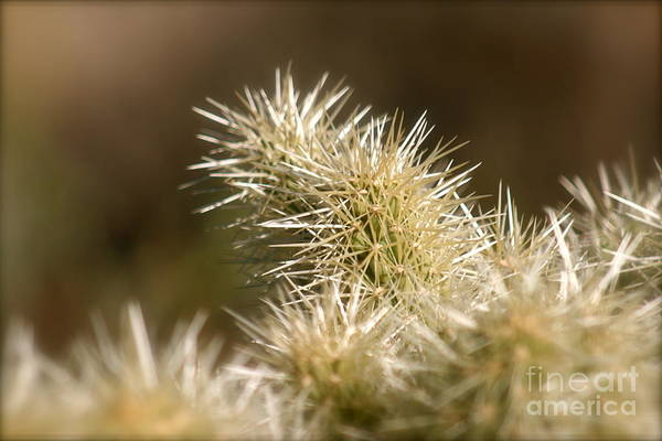 Cactus Art Print featuring the photograph Cacti by Nadine Rippelmeyer