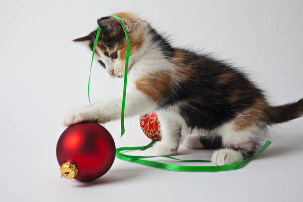 Calico Kitten Christmas Ornaments Art Print featuring the photograph Calico Kitten And Christmas Ornaments by Garry Gay