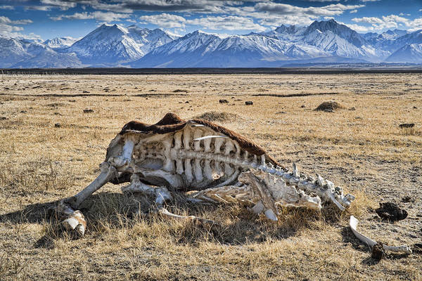 Nature Art Print featuring the photograph Carcass With A View by Kelley King