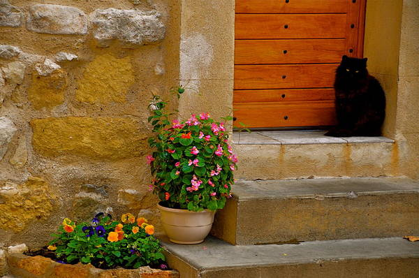 Cats Europe France Small Towns Street Scenes Art Print featuring the photograph Cat In Capestang France by K C Lynch