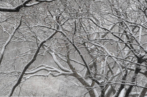 Landscape Snow Trees Park Branches Art Print featuring the photograph Central Park by Terese Loeb Kreuzer
