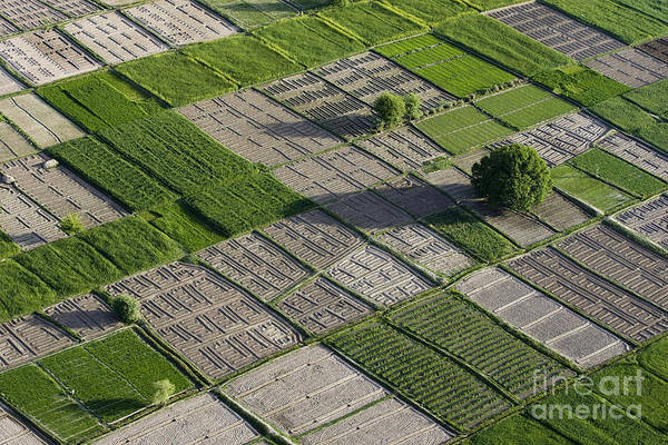 Field Art Print featuring the photograph Checker Board Fields by Tim Grams