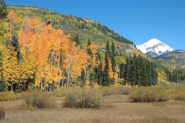 Aspen Art Print featuring the photograph Colorado Gold by Jerry McElroy