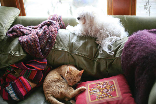 Animals Art Print featuring the photograph Comfy Bella And Cat by Liz Santie