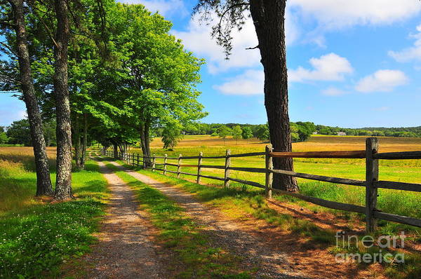 Country Road Art Print featuring the photograph Country Road by Catherine Reusch Daley