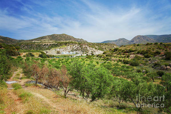 Crete Art Print featuring the photograph Crete Olive Grove by Sophie McAulay