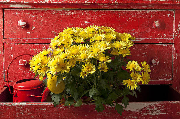 Daisy Art Print featuring the photograph Daisy Plant In Drawers by Garry Gay