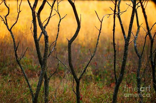 Dance Art Print featuring the photograph Dancing Trees by Randy Pollard