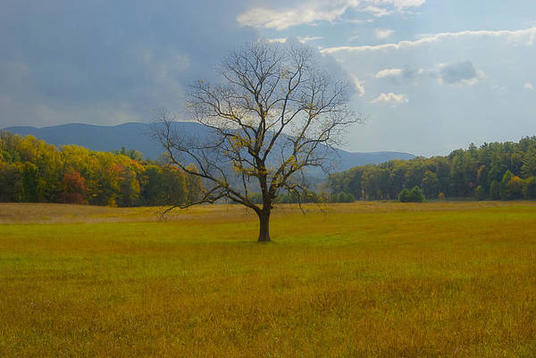 Landscape Art Print featuring the photograph Dare To Stand Alone by Michael Peychich