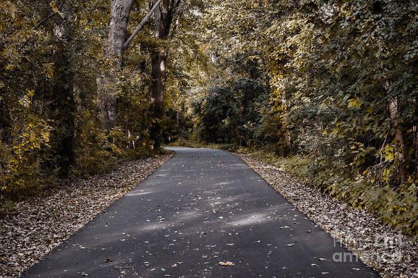Adventure Art Print featuring the photograph Dark Autumn by Scott Chimber