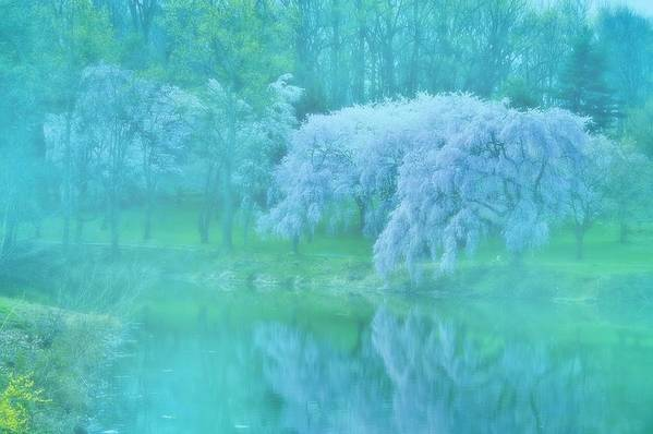 Cherry Blossom Trees Art Print featuring the photograph Daydream - Holmdel Park by Angie Tirado