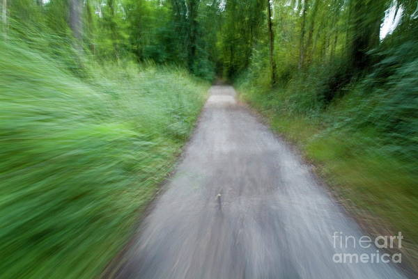 Active Art Print featuring the photograph Dirt Path And Surrounding Bush Seen From A Cyclist's Point Of View by Sami Sarkis