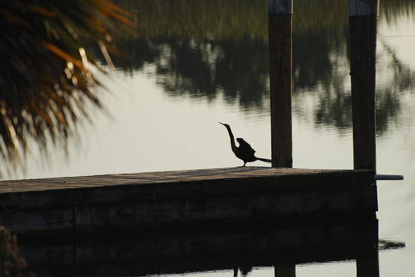 Reflections Art Print featuring the photograph Dock Bird In Color by Rob Hans