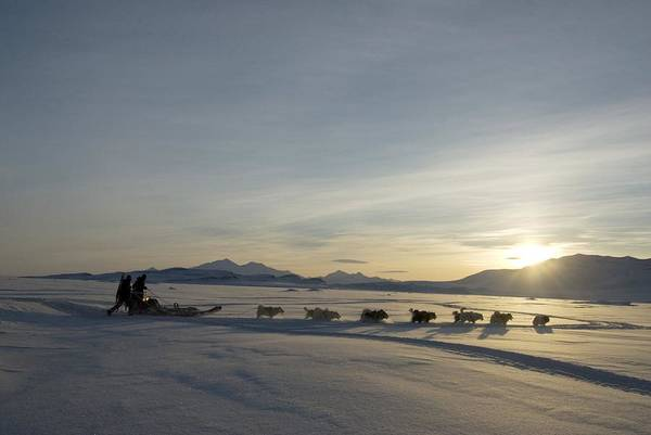 Snow Art Print featuring the photograph Dogsledge, Northern Greenland by Louise Murray