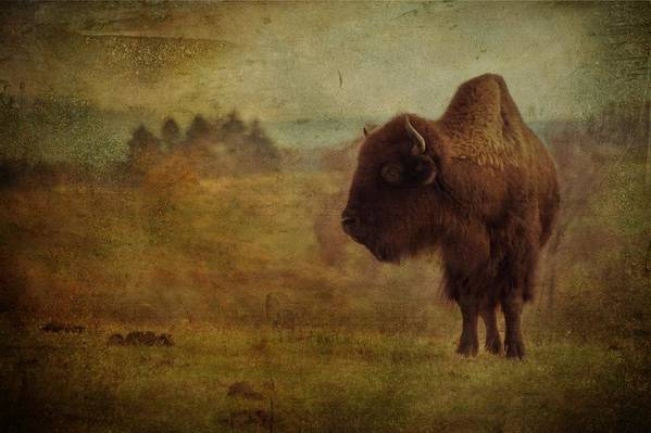 Bison Art Print featuring the photograph Doo Doo Valley by Trish Tritz