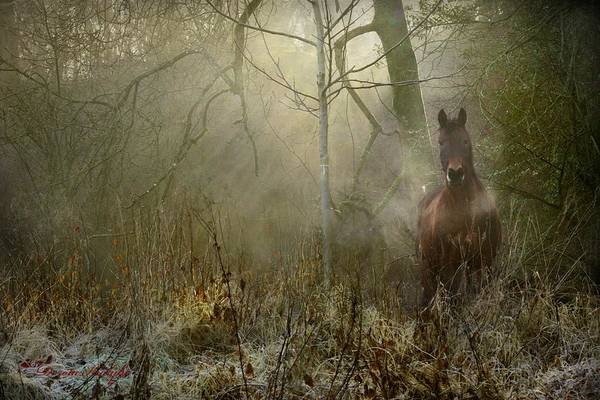 Horse Art Print featuring the photograph Dream Forest by Dorota Kudyba