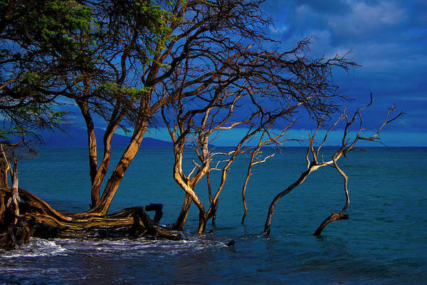 Art Print featuring the photograph Driftwood 01 by Paulo Sabado